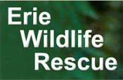 Erie Wildlife Rescue